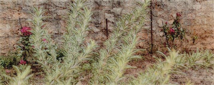 benthic-gardens-7