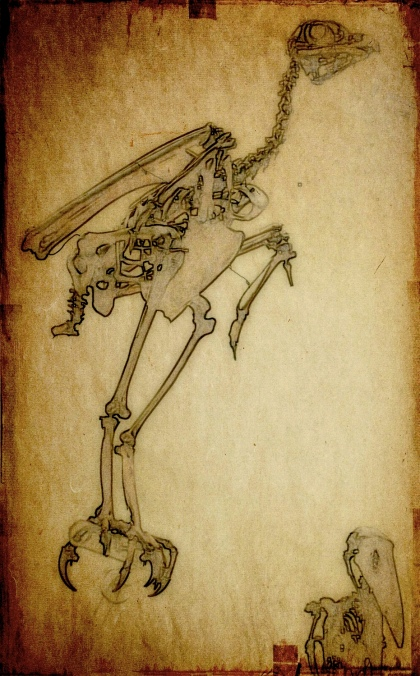 bird-skeleton