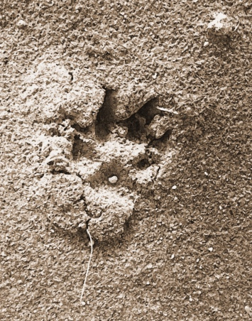 pawprint-copy