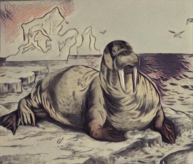 Victorian Walrus