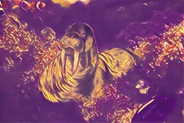 ghost walrus 2 prisma